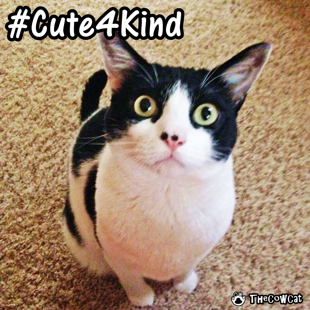 The Cow Cat Cute4Kind Campaign spread Cuteness of Cats and Pets for Kindness
