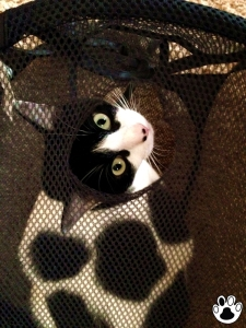 The Cow Cat | Wonder Who Made The Hole