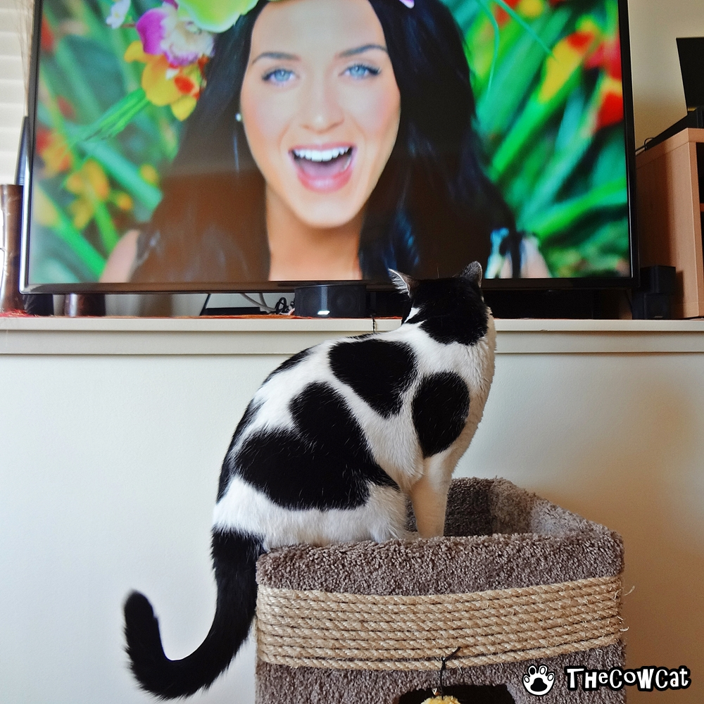 super bowl halftime show with Katy Perry and The Cow Cat
