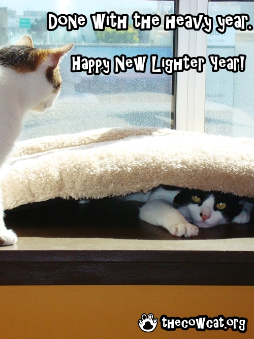 lighter year the cow cat new year ecard on post