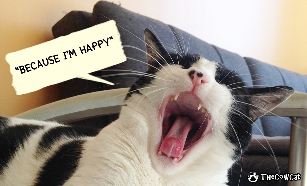 The Cow Cat Crowdfunding Project Filming Singing Happy