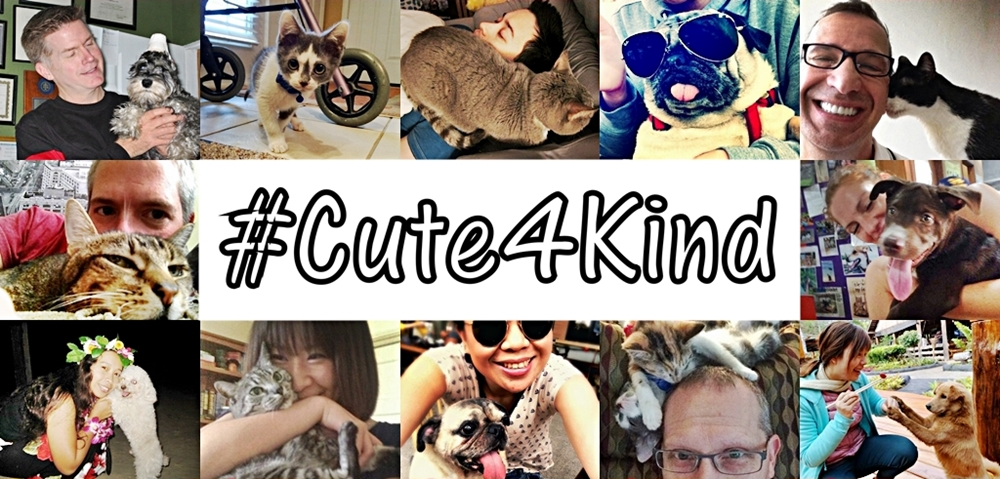 Cute4Kind Cover Without Logo The Cow Cat