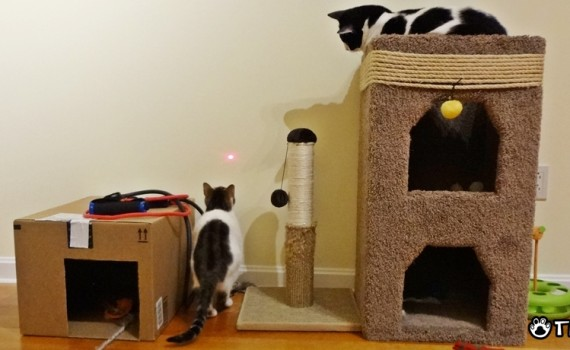 The Moving Red Spot Laser : Kitty's Best Friend The Cow Cat And His Sister Are Having A Good Time