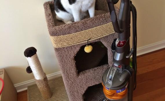 A Vacumm Cleaner: Cat's Let Favorite Loud Creature