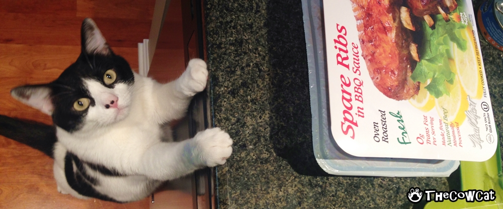May Cow Cat Sniff Your Food? | The Cow Cat Whenever Food Is On The Counter, It Is Mine