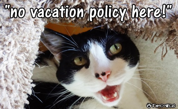 Good Kitty Advice For Vacations | The Cow Cat No Vacation Policy Here