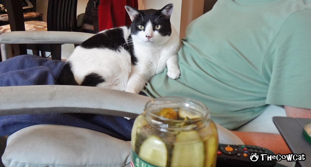 May Cow Cat Sniff Your Food? | The Cow Cat Pickles And Daddy Are The Best