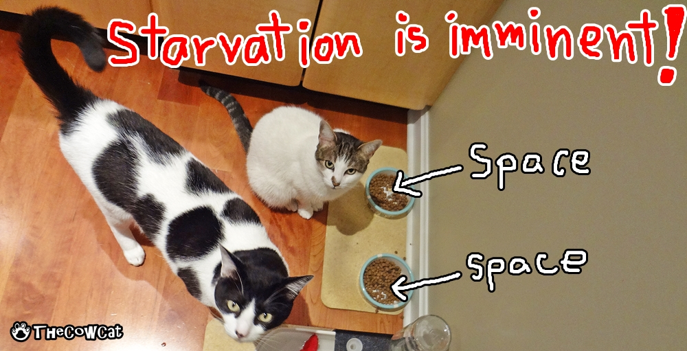 Starvation is killing me | The Cow Cat Starvation is imminent