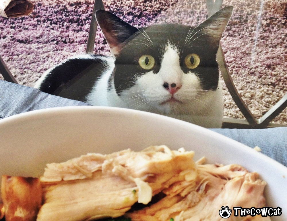 Starvation is killing me | The Cow Cat food beg face