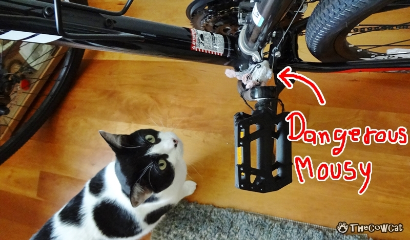 How to Bike Like a Pro by The Cow Cat Inspect His Bike For a Dangerous Mousy