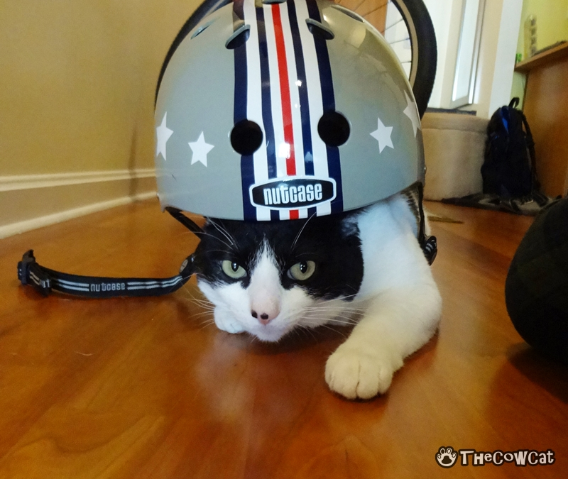 How to Bike Like a Pro by The Cow Cat Gets Perfect Helmet
