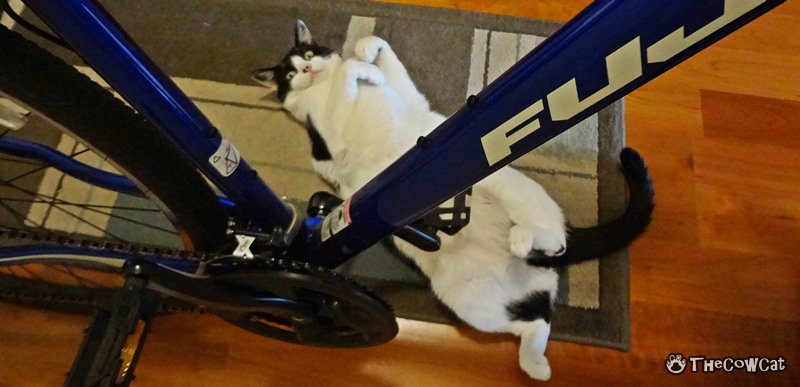 How to Bike Like a Pro by The Cow Cat Stare At Your Bike