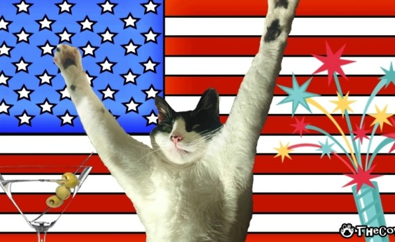 How To Celebrate The 4th of July With Your Cat | The Cow Cat fireworks and martini