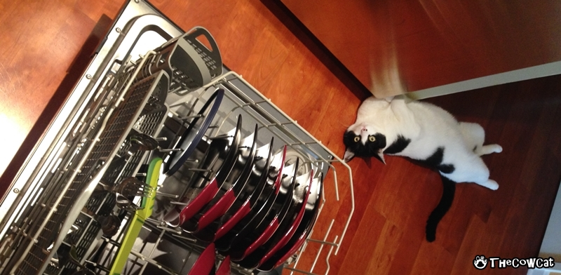 How to clean your house with a cat by the cow cat doing dishes