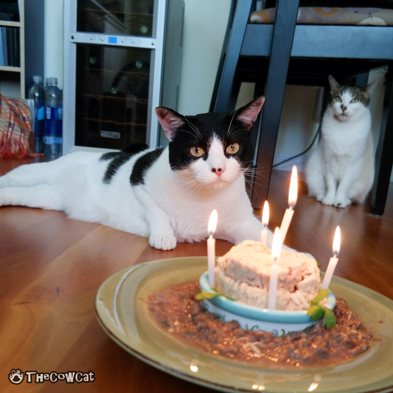 The kitty birthday and My Only Wish This Year