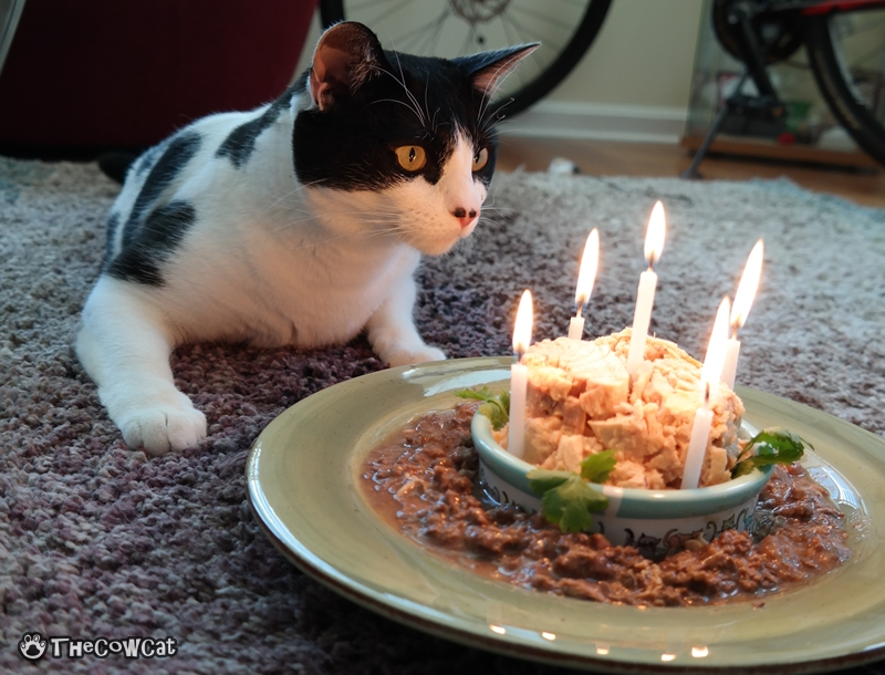 The kitty birthday and My Only Wish This Year | The Cow Cat loves bday candles