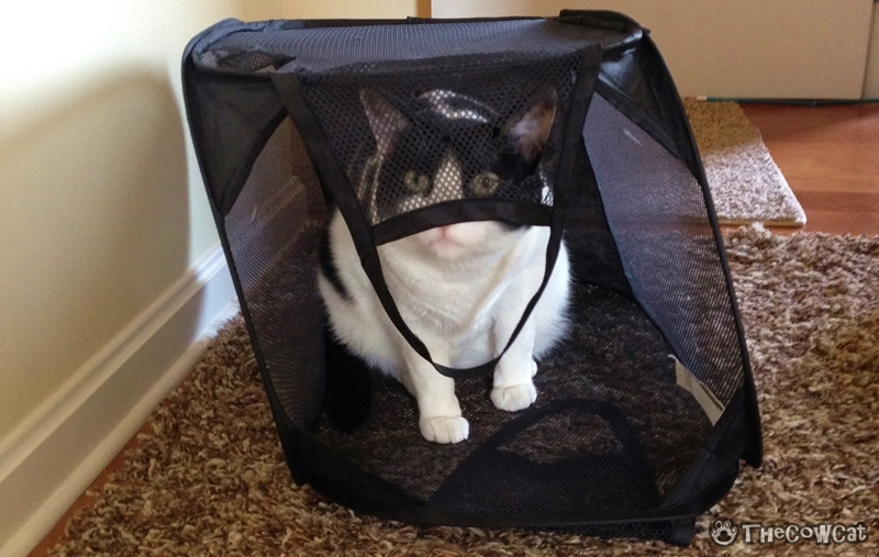 We cats want to help you do laundry | The Cow Cat The Basket Keeper