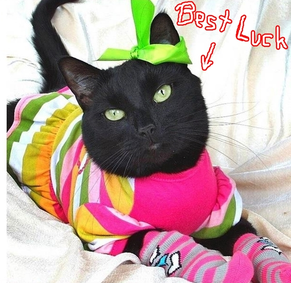 The Caterview Scotch and Sophie Black Cat Best Luck