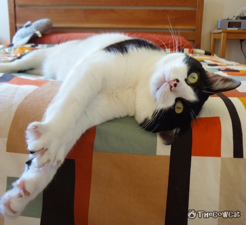We cats want to help you do laundry | The Cow Cat The Bed Maker