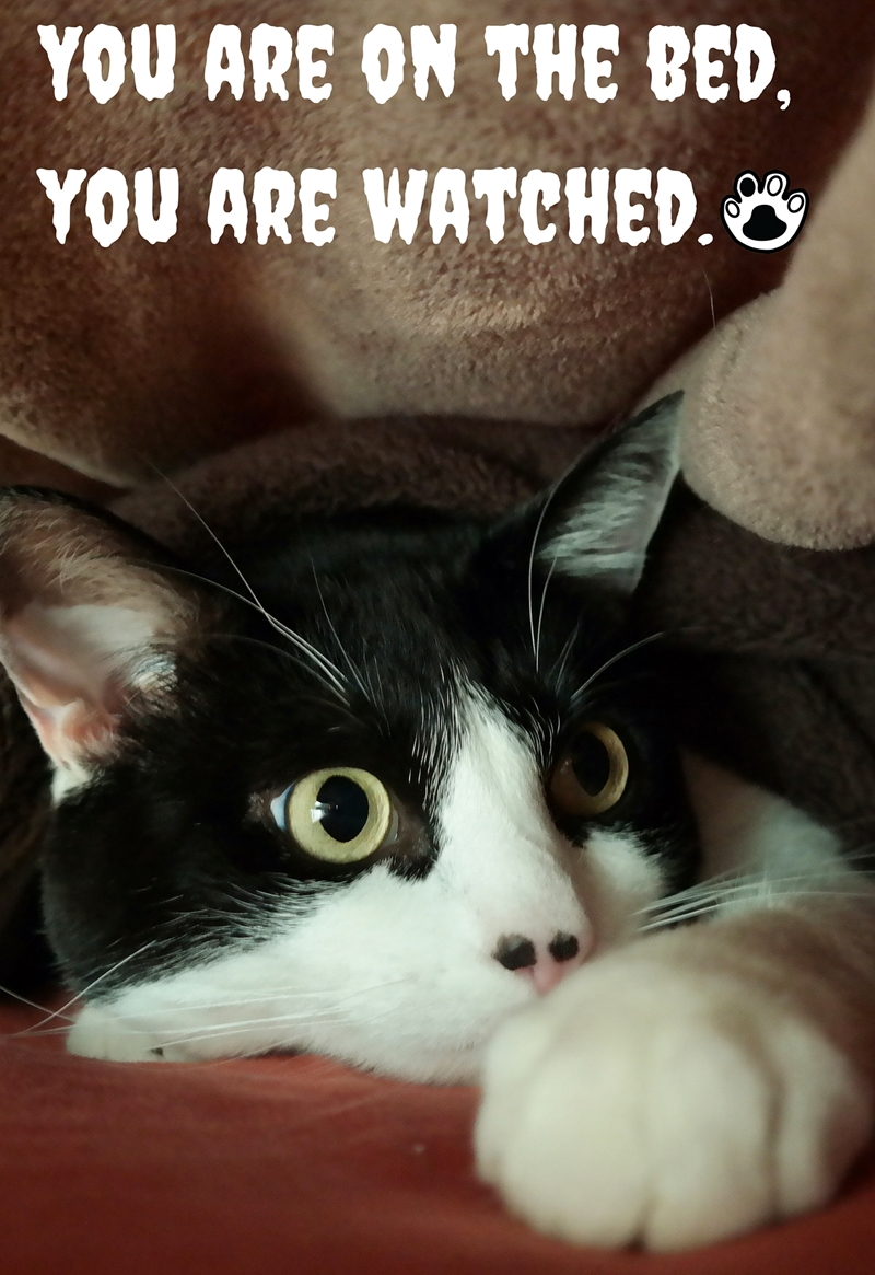 We Are Watching You! | The Cow Cat kitty is watching you while you sleeping