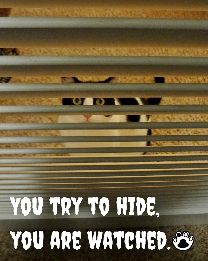 We Are Watching You! | The Cow Cat Stop hiding because we can see you anyway.