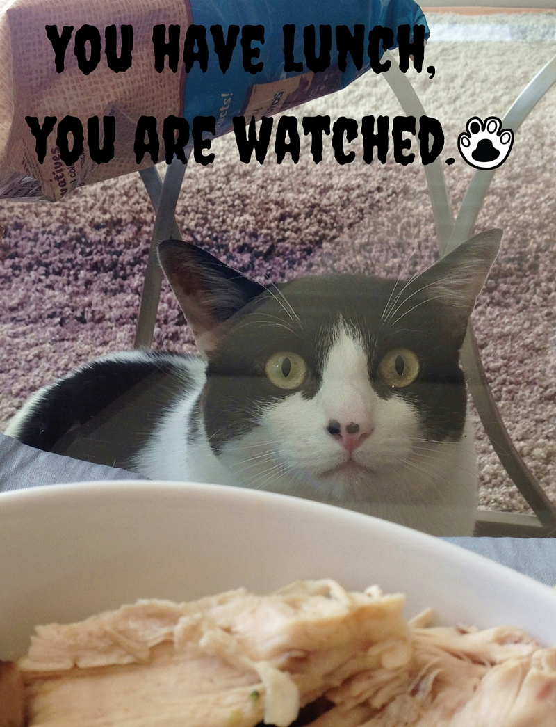 We Are Watching You! | The Cow Cat is watching you eating