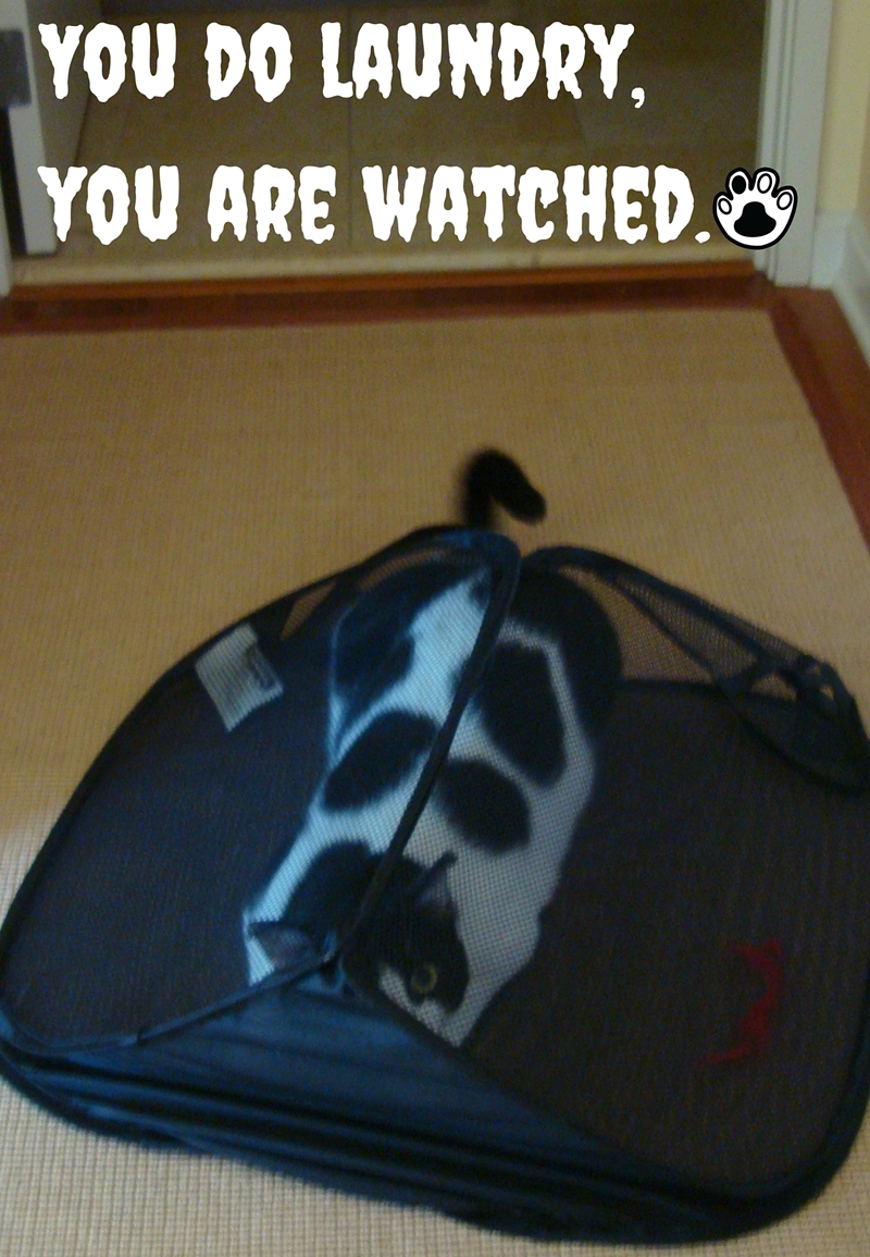 We Are Watching You! | The Cow Cat is wathing you do a laundry and want to help you.