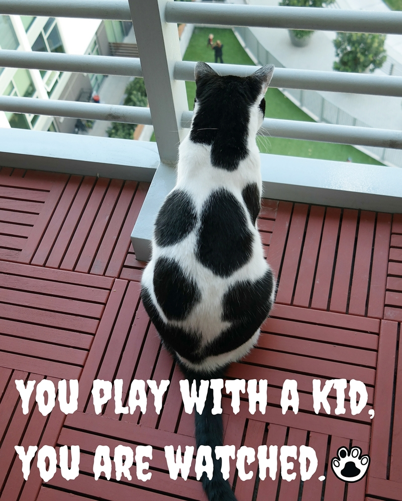 We Are Watching You! | The Cow Cat is watching you playing with a kid