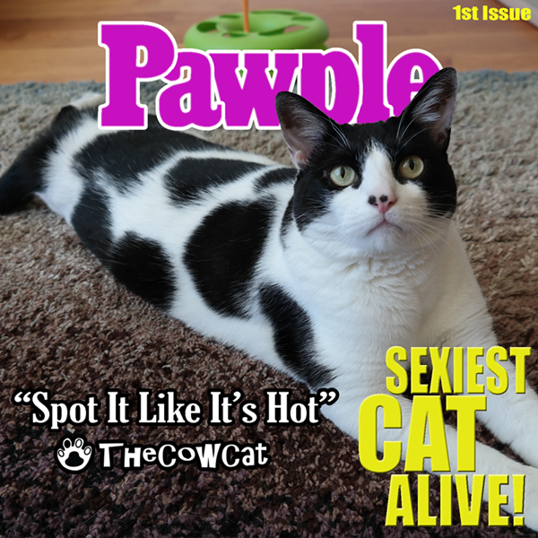 Pawple Magazine's SEXIEST CAT ALIVE 1st Issue The Cow Cat on the cover