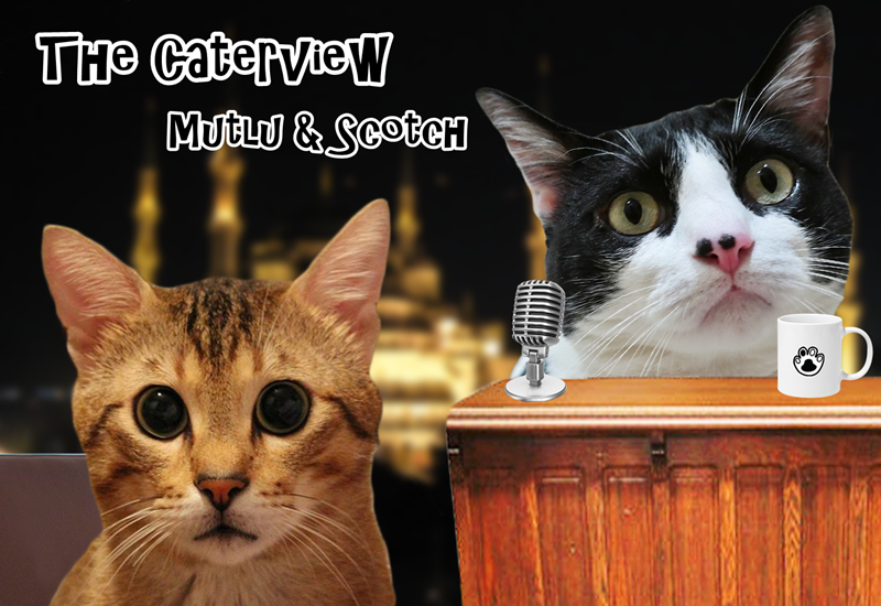 The Caterview Episode 2: Mutlu Happy Cat Family Cover Photo