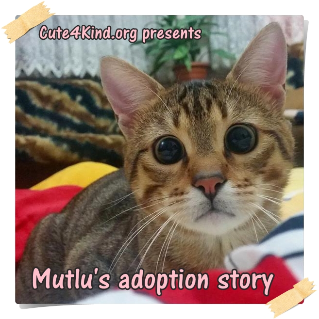 The Caterview Episode 2: Mutlu Happy Cat Family Rescue Cat Story
