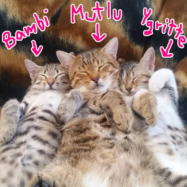 The Caterview Episode 2: Mutlu Happy Cat Family with Bambi and Ygritte