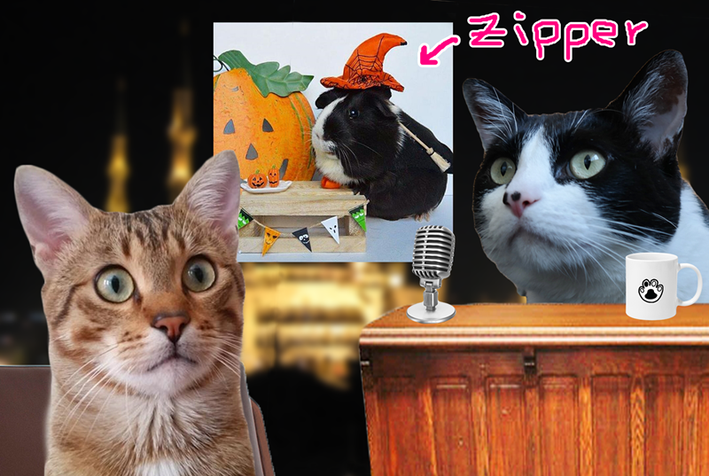 The Caterview Episode 2: Mutlu Happy Cat Family and Zipper The Pig