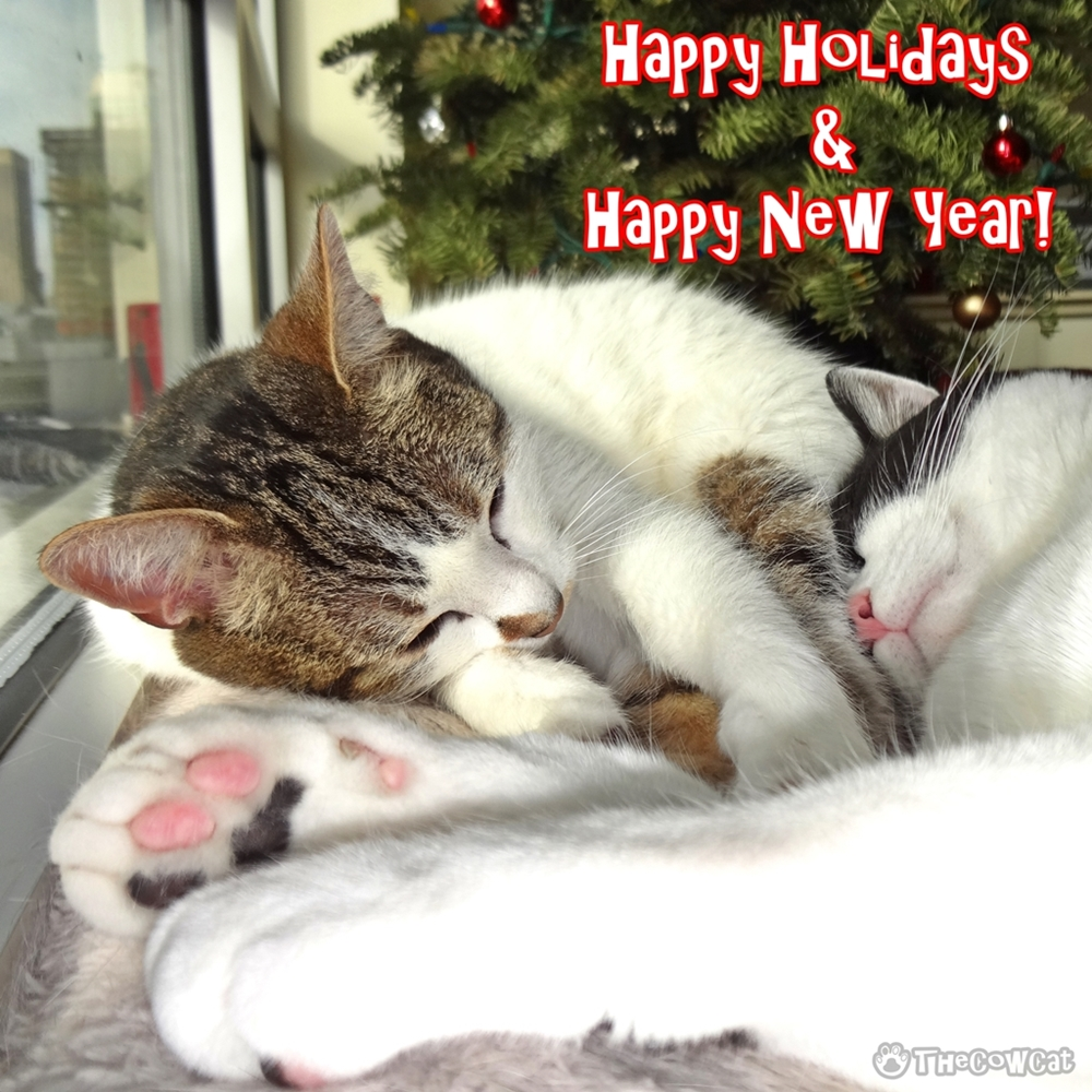 The Cow Cat | Happy Holidays & Happy New Year