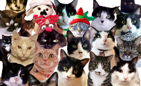 The Cow Cat & Friend   Where Is Our Catnip Funny Holidays Card