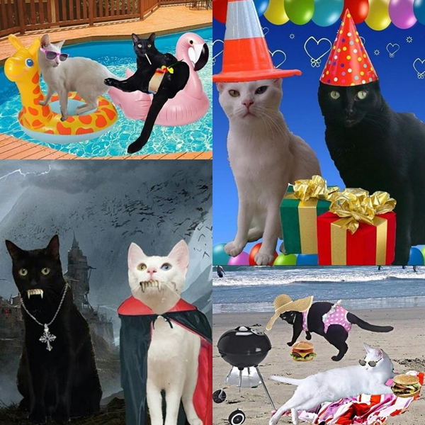 "The Caterview Episode 3: Zena and Shera ""The Yin Yang Sisters"" Pawty animals. Party like a pro."