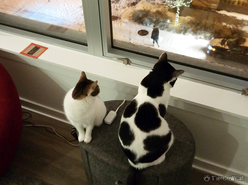 The Cow Cat | Let It Snow Cow Cat and Tabby Cat are watching their very first snow