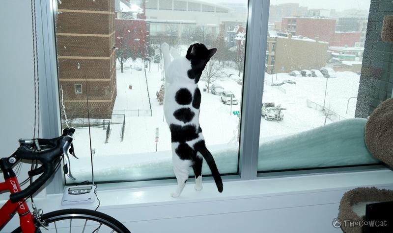 The Cow Cat | Let It Snow White Snow Catcher