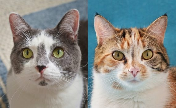 Help Foggy and Sunshine Find a Home Sweet Home | The Cow Cat