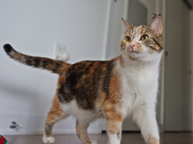 Help Foggy and Sunshine Find a Home Sweet Home: Sunehine is ready to rock | The Cow Cat